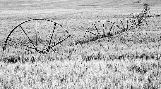 Country farm by Cricket Jones