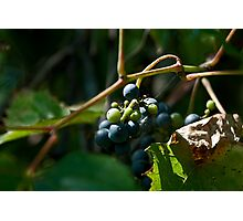 Vineyard Chateau Cooper's Marsh Photographic Print