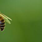 Just Bee by NEmens