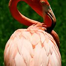 Flamingo at Jungle Gardens X by Sheryl Unwin