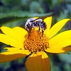 the pollen-nator  by LoreLeft27