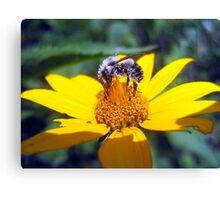 the pollen-nator  Canvas Print
