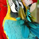 Macaws at Jungle Gardens XVIII by Sheryl Unwin