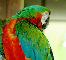 Macaw at Jungle Gardens XIIII by Sheryl Unwin