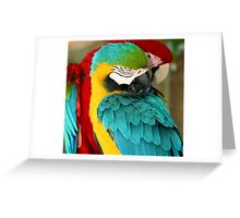 Macaws at the Jungle Gardens XX Greeting Card