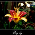 Day lily 2 by Maurice Gomez
