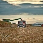 Harvest Time by Studio601