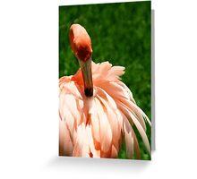 Flamingo at Jungle Gardens XI Greeting Card