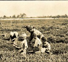 Whole family working on Hichens Farm, Cannon, Delaware, USA 1910 by Dennis Melling