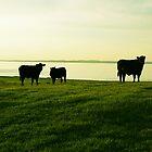 Meadow by Luke Crozier