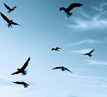Aqua Gulls by Luke Crozier