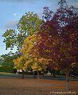 Three colours of autumn by Odille Esmonde-Morgan