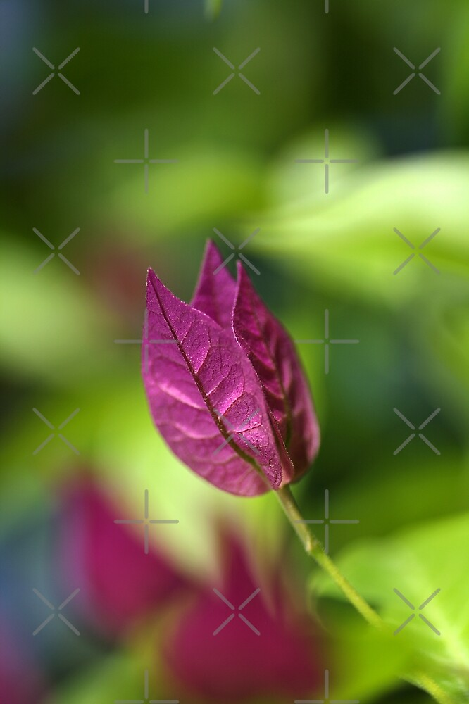 Bougainvillea over Tie Dyed Nature by Joy Watson