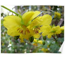 Perfectely Dressed in Yellow for Spring  Poster