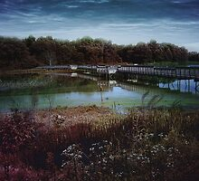Swamp Bridge by Judi Taylor