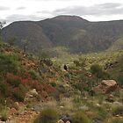 Walking in Chewings Range, Central Australia by rolpa