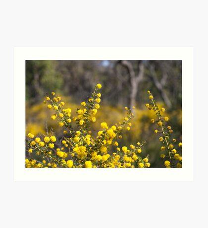 prickly moses Art Print