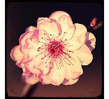 Vintage Pink Photographic Print