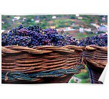 Madeira Grapes Poster