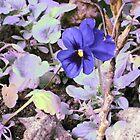 purple Flower by jonolaf