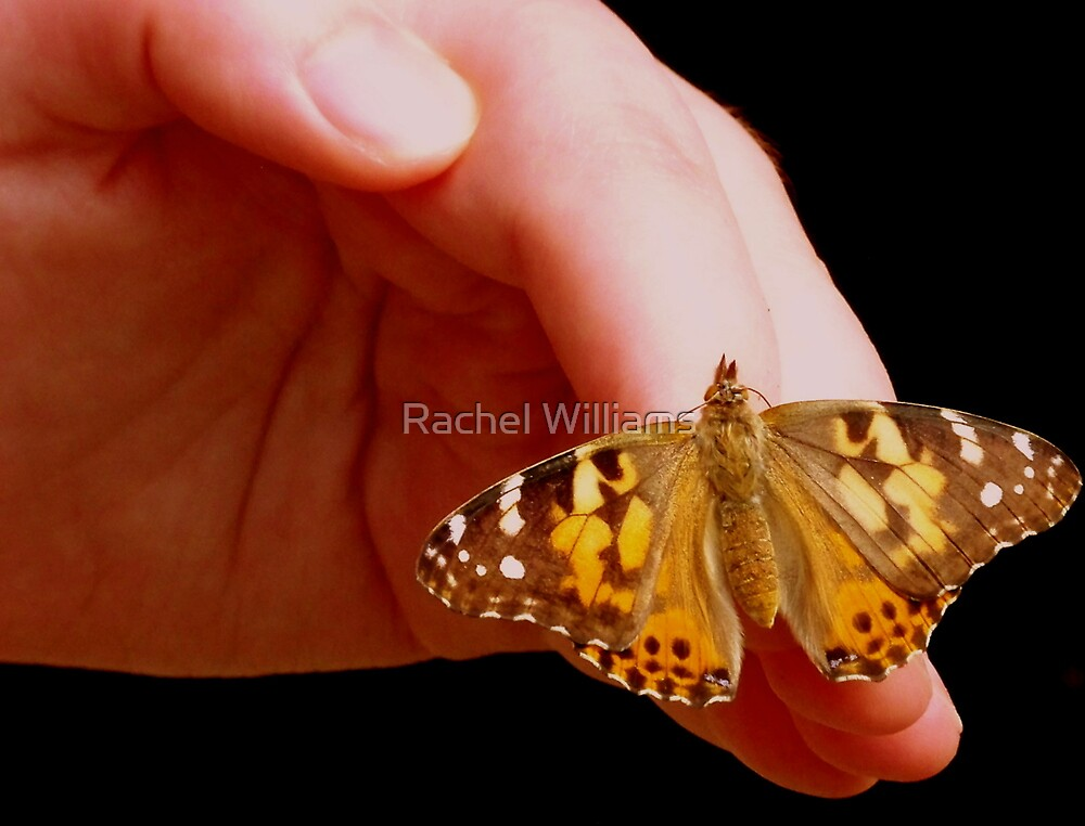 savior by Rachel Williams