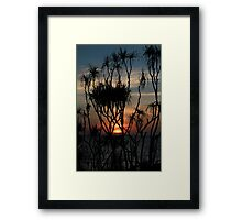 Pandanas Sunset Darwin Framed Print