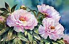 Tree Peonies by Ann Mortimer