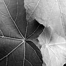 Leaves in Black and White by Janice Carter