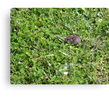 Where's that four-leafed clover? Canvas Print