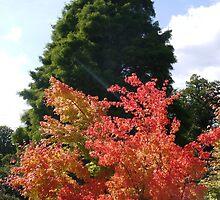 Colours at Wakehurst Place by Emma Smith