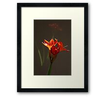 Looking in the mirror Framed Print