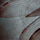 Dragonfly wings by Jan Bickerton