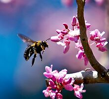Bee at Magnolia Plantation, SC by Photography by TJ Baccari