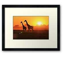 Giraffe - Sunset Gold and Harmony - African Wildlife Framed Print