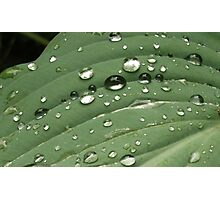 After the shower - water droplets on a leaf Photographic Print