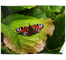 Butterfly at Brodsworth Poster