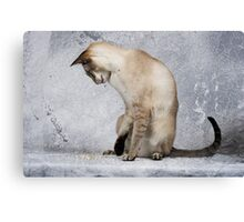 Scooby - Cat Play Canvas Print