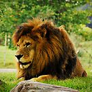 King by lisabella