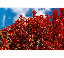 A red view on a fall day (you burn in me) Photographic Print