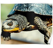 Mr turtle..how many licks does it take to get to the center of a toosie pop? Poster