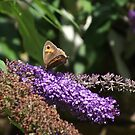 Moth or Butterfly ??? by Dawnsuzanne