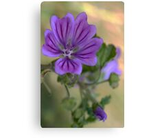 Meadow Crane's-bill Canvas Print