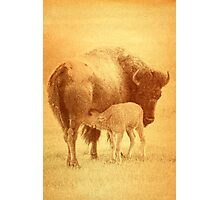 Bison II Photographic Print
