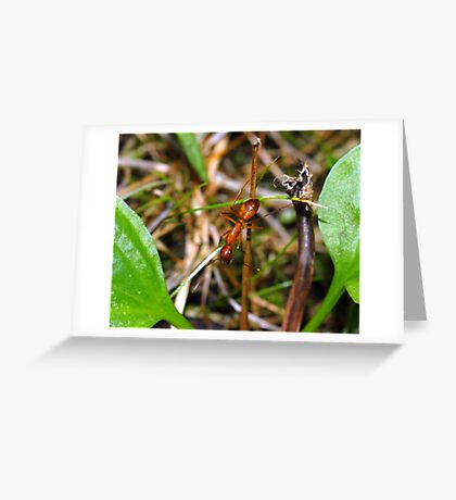 An Ant Greeting Card