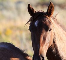Portrait of a Wild Horse by Kate Purdy