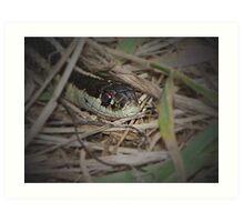 Snake In The Grass Art Print