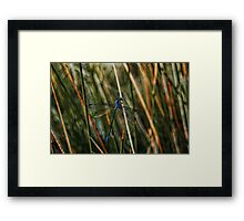 Mosquito Framed Print