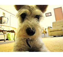 Dog's Eye View Photographic Print