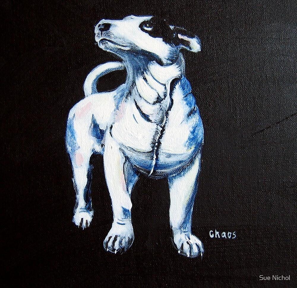 Chaos, Bull Terrier by Sue Nichol