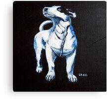 Chaos, Bull Terrier Canvas Print